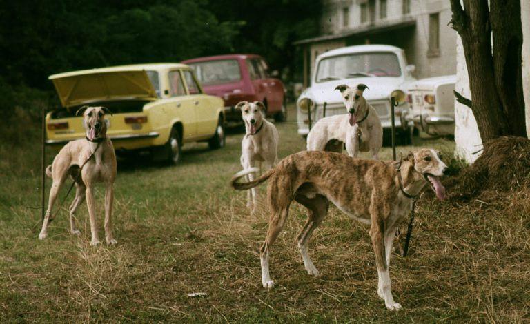 Kutyaélet régen – Fortepan fotók
