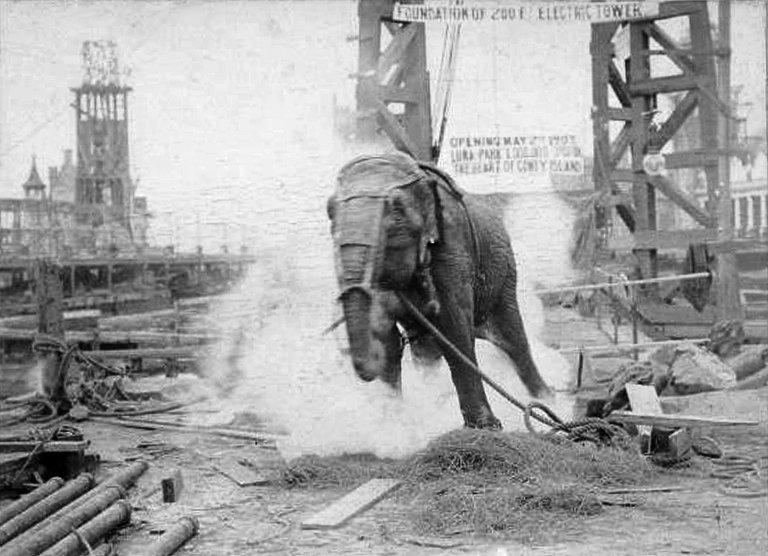 Edison bemutatja: egy elefánt kivégzése váltóárammal