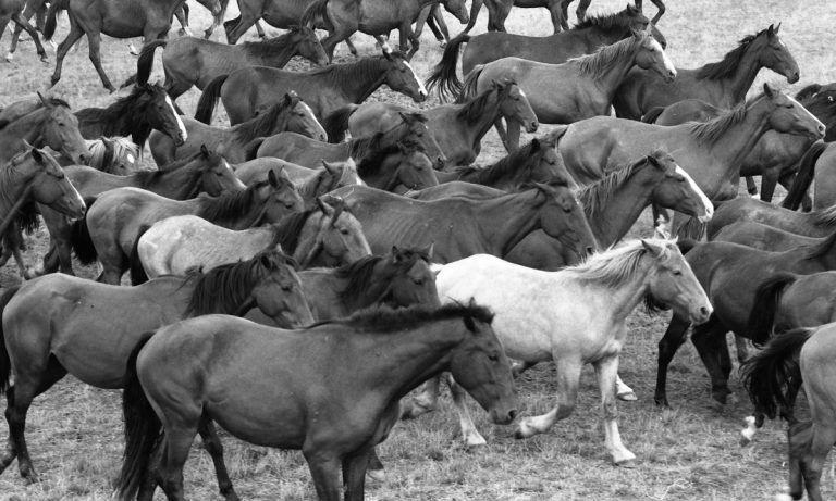 Magyar nemzet, lovas nemzet – Fortepan fotók