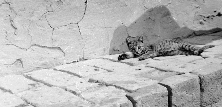 Édes kis szőrgombolyagok – Macskás Fortepan fotók