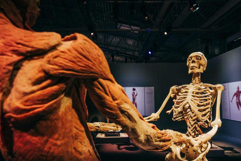 A testről a bőr is lekerül – Body kiállítás Budapesten február 15-től
