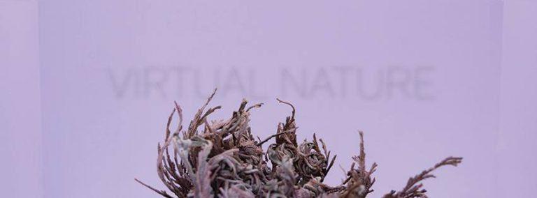 Virtual Nature – Kuzma Eszter Júlia kiállítása