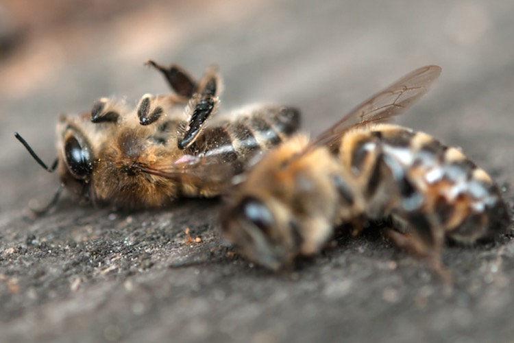 Hová lett a tavalyi méz?