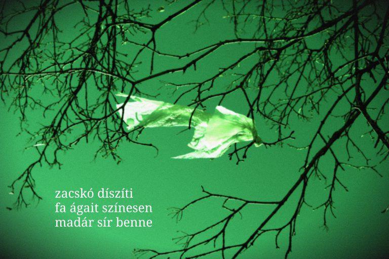 #estivers 48. – Rásó Attila haikui
