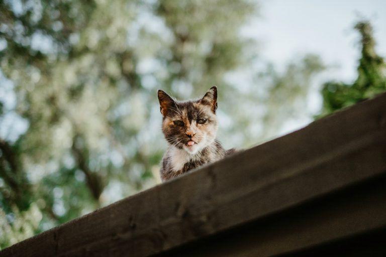 Baranyai Barna: Elvitte a cica